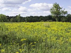 Grant-Bradbury Prairie Preserve